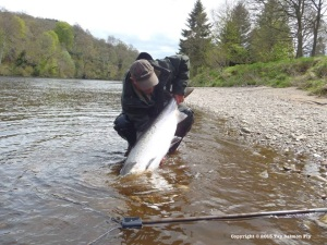 Largest Tay Salmon May